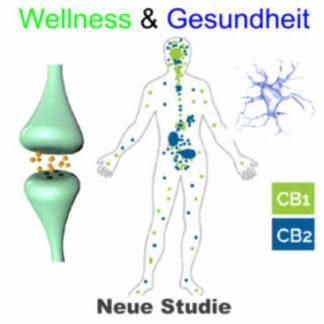 Wellness & Gesundheit